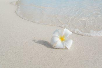 Flower on beach representing summer